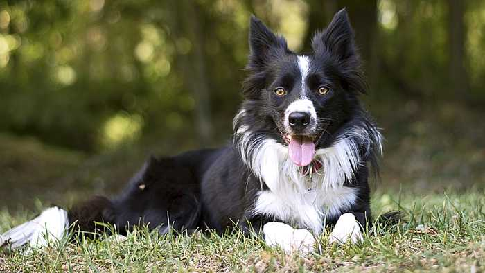 Sur Animaux dès 13h10 : Le refuge Dog Tales