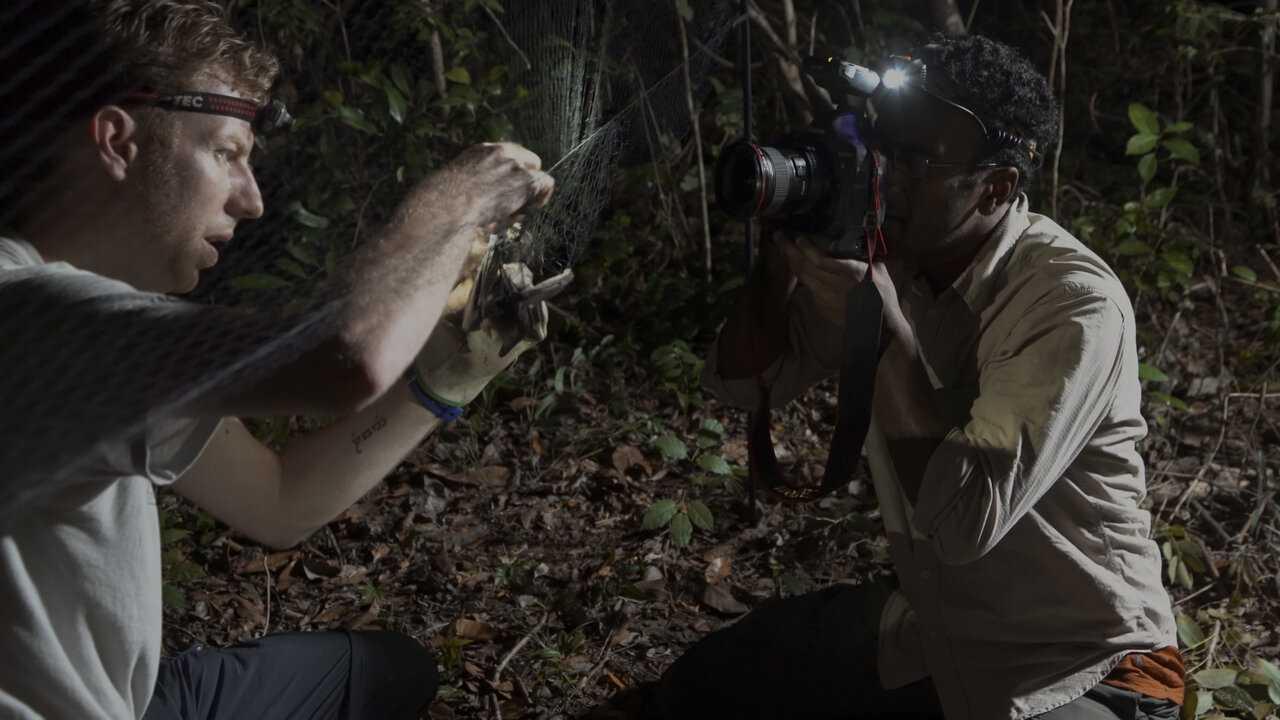 Sur National Geographic Wild dès 13h05 : Chauves-souris carnivores