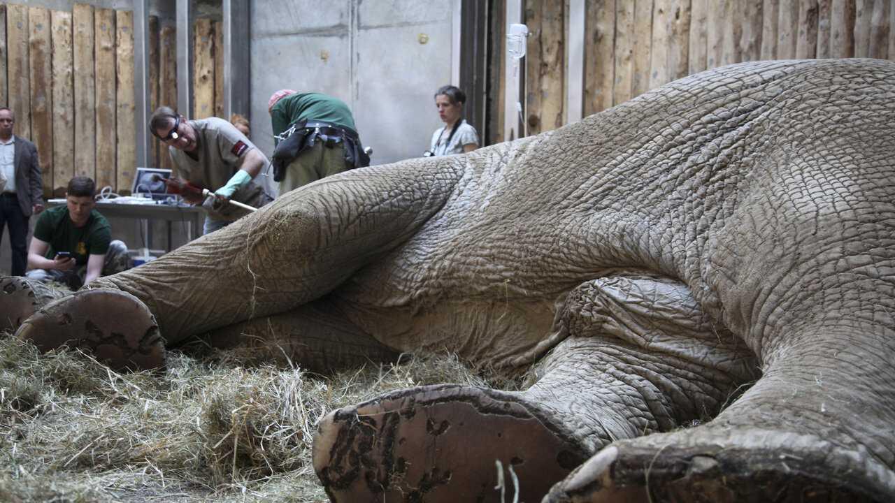 Sur Planete Plus dès 06h28 : Vétérinaires de l'extrême