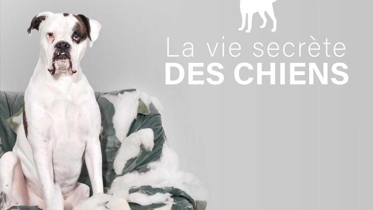 Sur Animaux dès 19h40 : La vie secrète des chiens