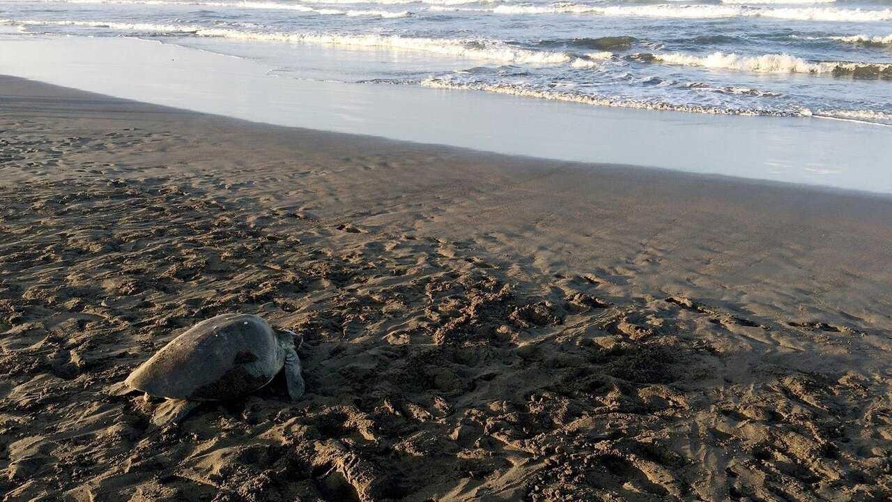 Sur Arte dès 12h30 : La vie secrète d'un nid de tortues marines