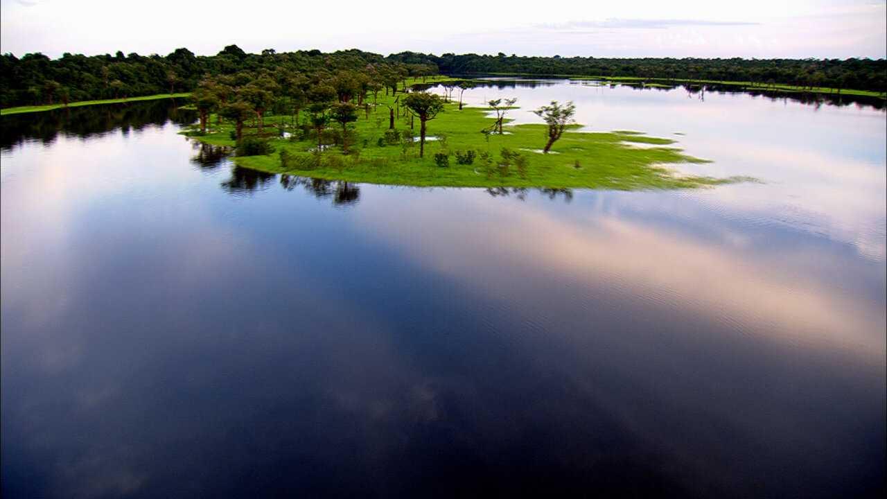 Sur National Geographic Wild dès 07h00 : Sur les rives du fleuve Amazone