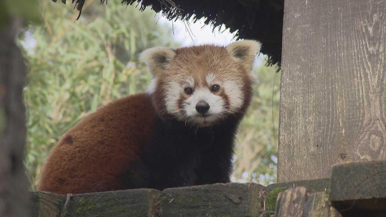 Sur France 4 dès 14h10 : Une saison au zoo