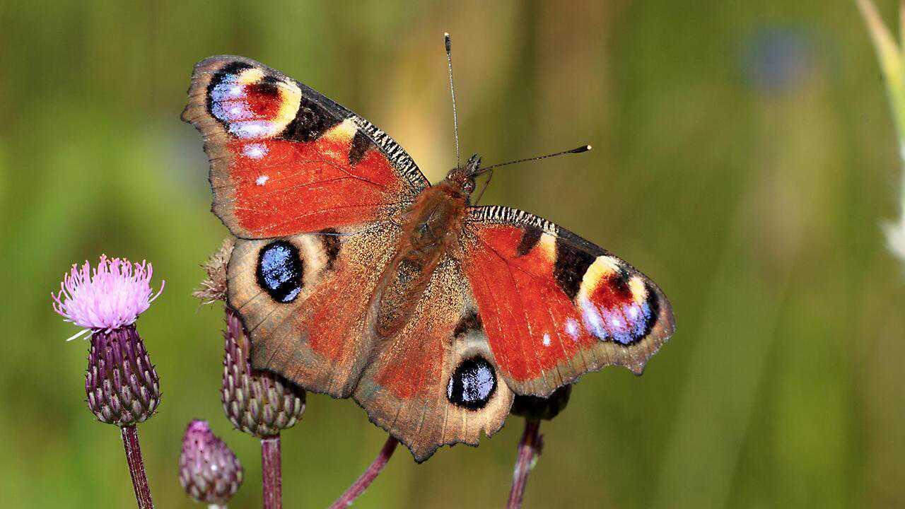 Sur Arte dès 13h15 : Enfants du soleil, les papillons