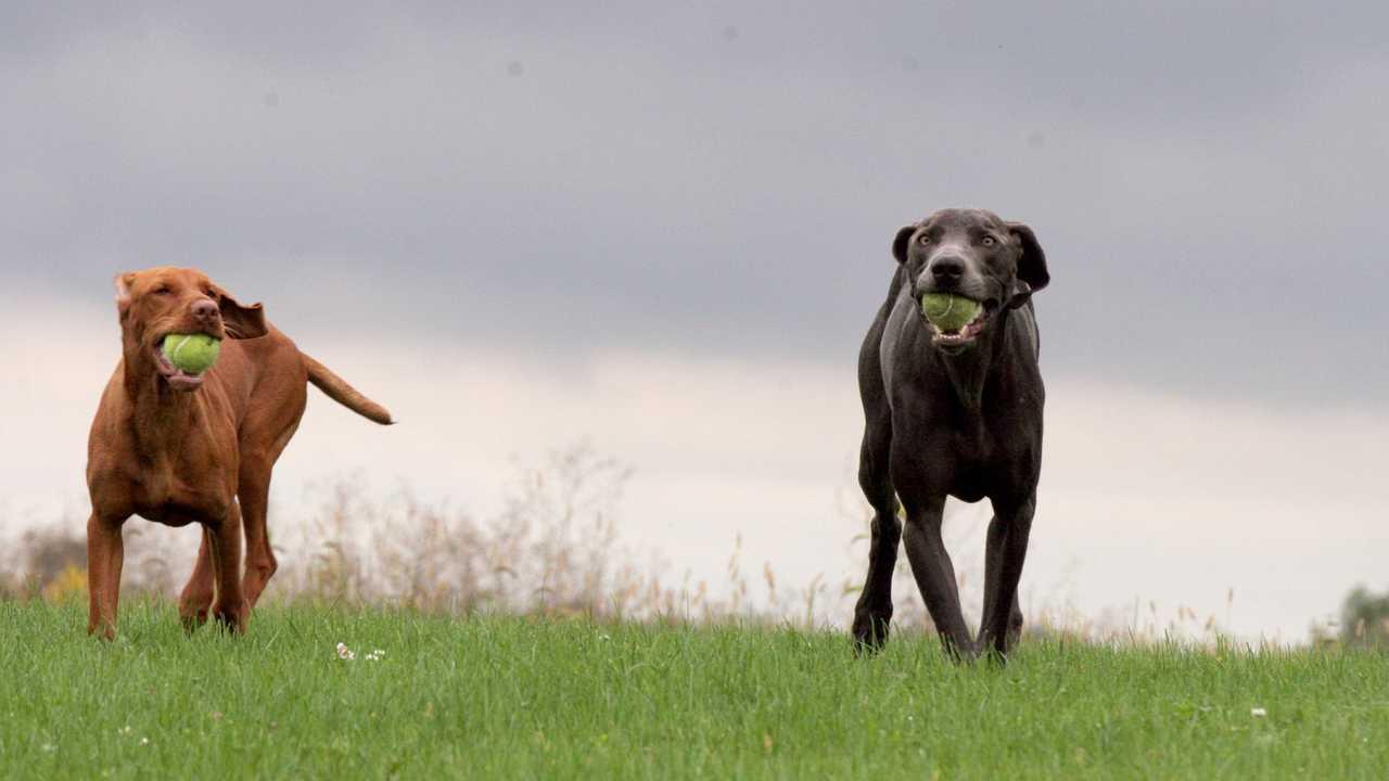 Sur Animaux dès 14h40 : Le refuge Dog Tales