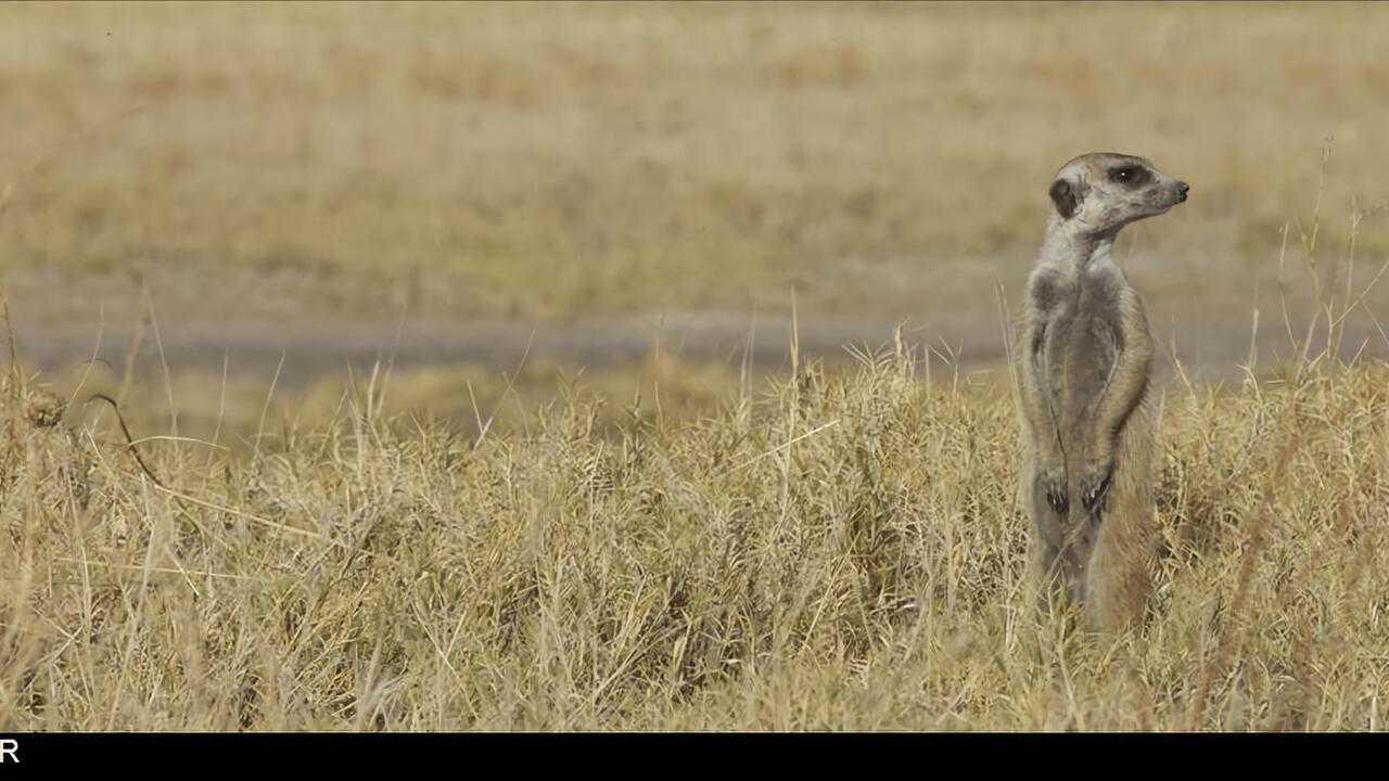 Sur Animaux dès 16h30 : Richard Rasmussen et les animaux d'Afrique