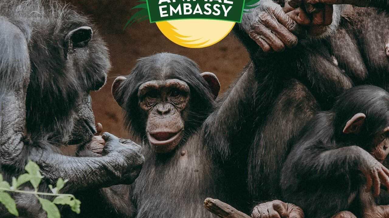 Sur Animaux dès 10h30 : Animal Embassy