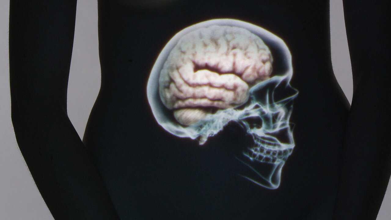 Sur Arte dès 23h40 : Le ventre, notre deuxième cerveau