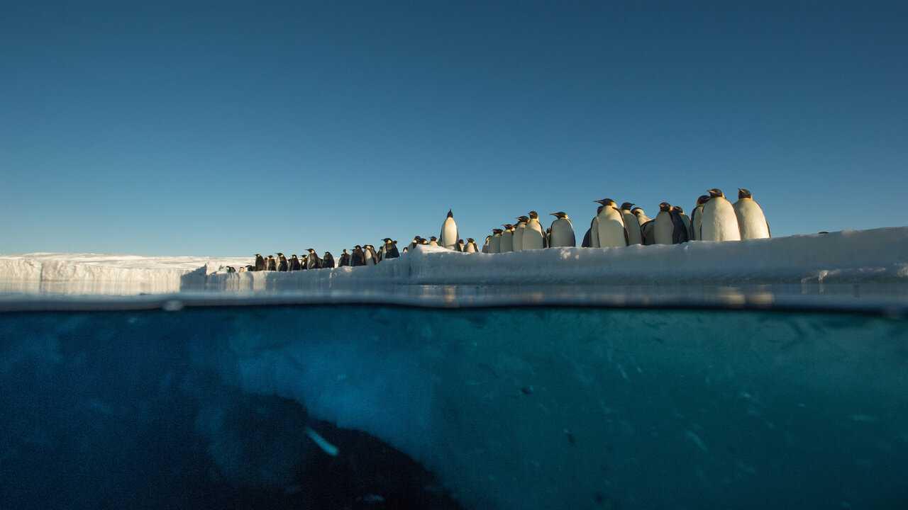 Sur Ushuaia TV dès 23h40 : Antarctica