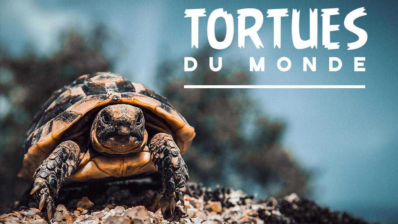 Sur France 5 dès 09h55 : Tortues du monde