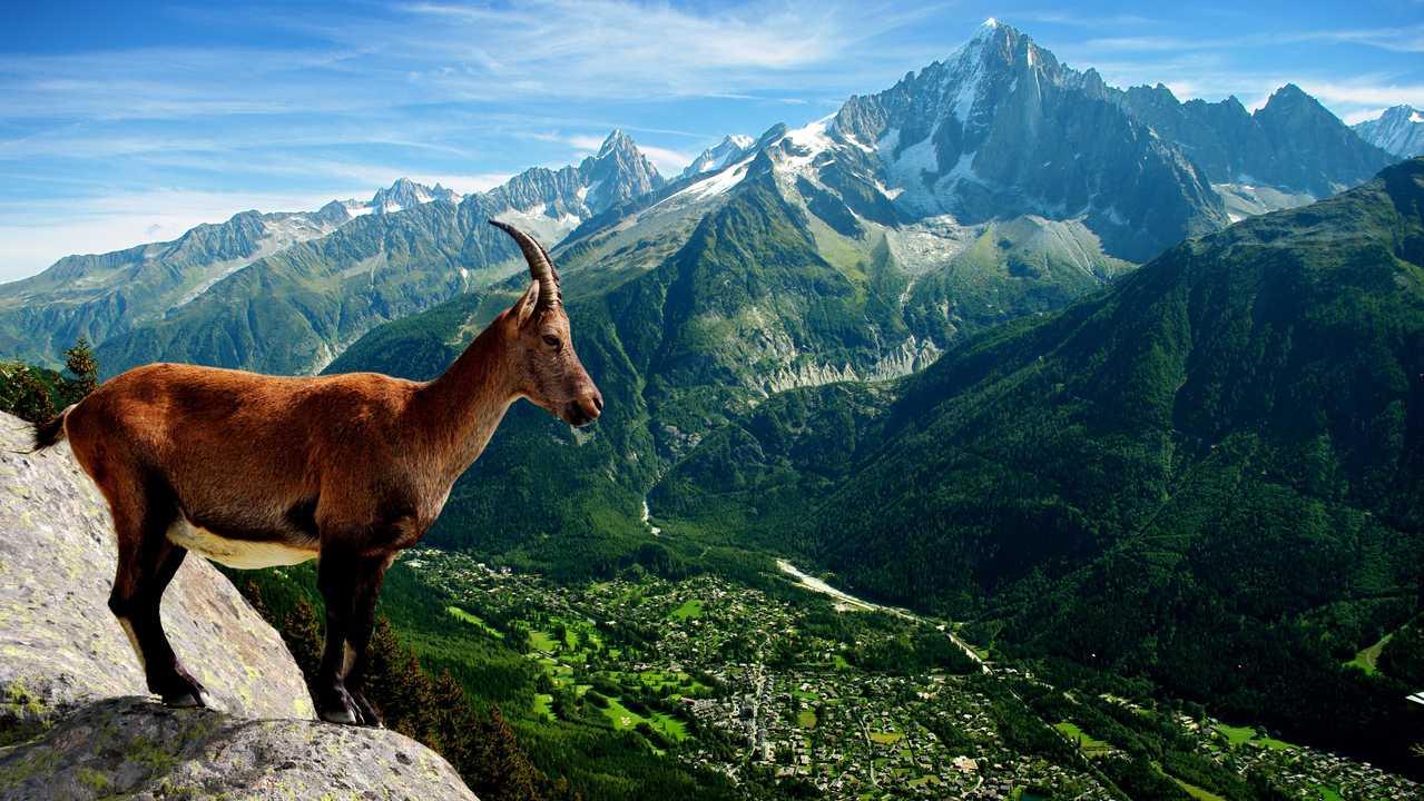 Sur Ushuaia TV dès 20h10 : Une vie de bêtes
