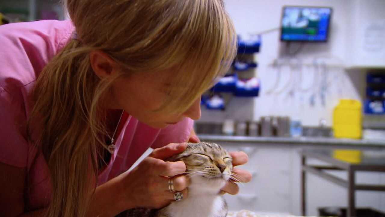 Sur Animaux dès 11h55 : Le vétérinaire de Bondi Beach