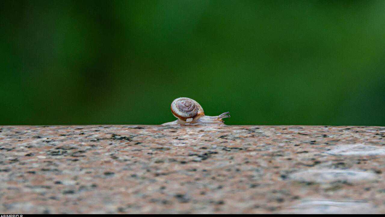 Sur Science et Vie TV dès 08h08 : Le monde des petites bêtes
