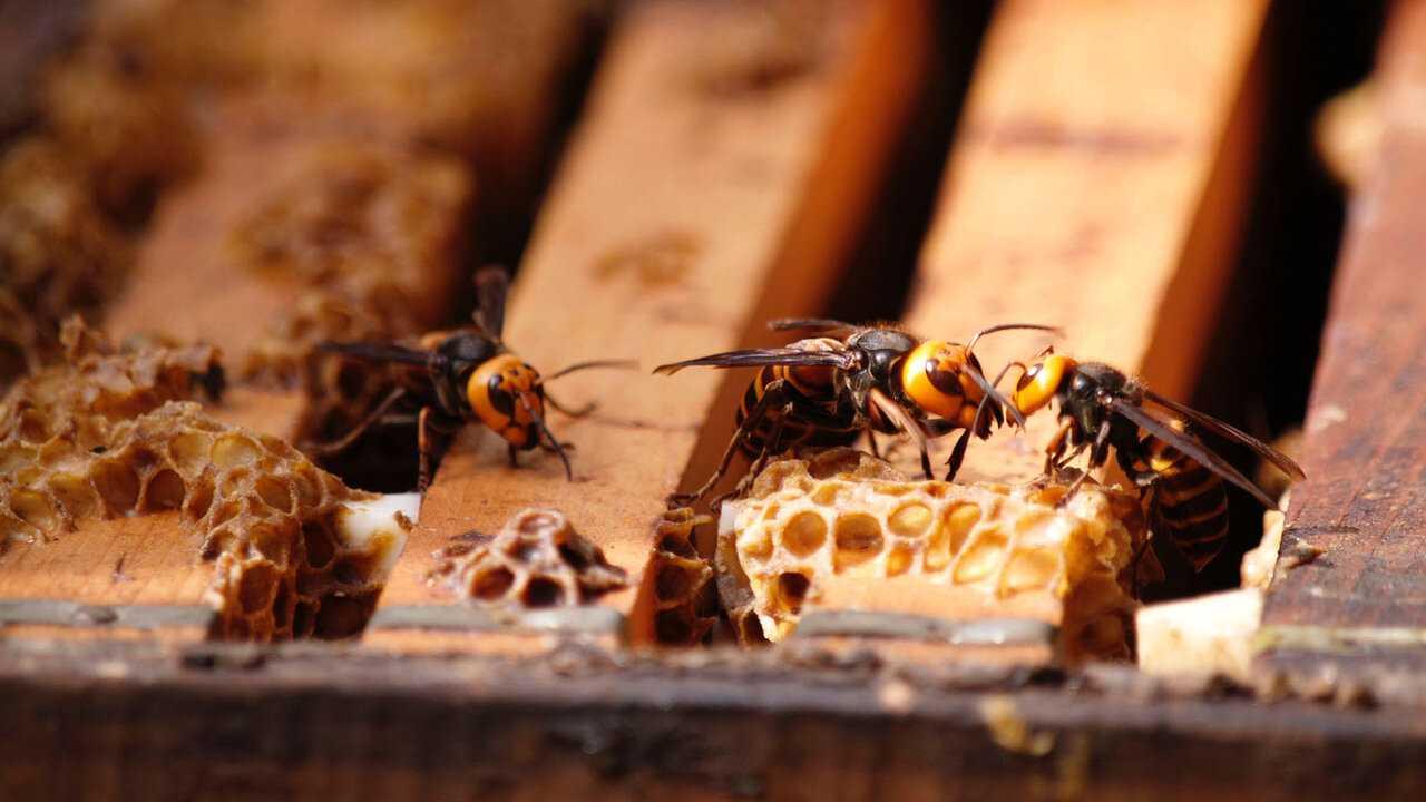 Sur National Geographic Wild dès 14h00 : Insectes en guerre
