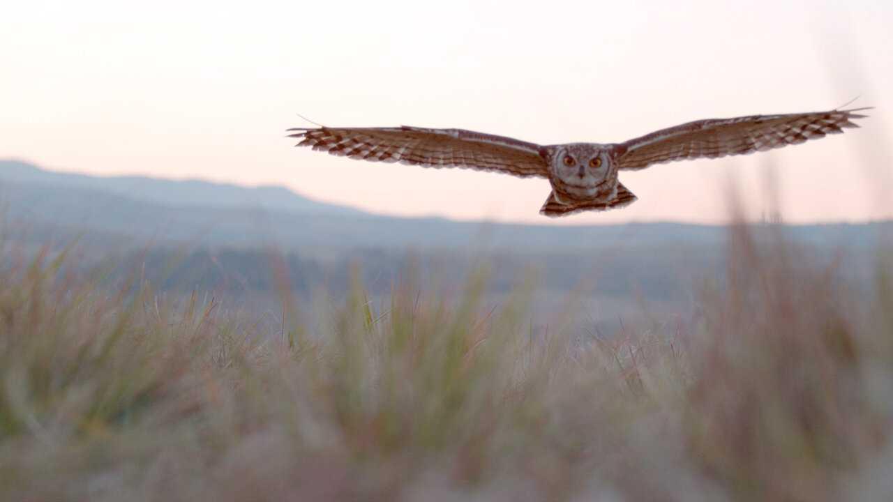 Sur National Geographic Wild dès 14h50 : Incroyables engloutisseurs