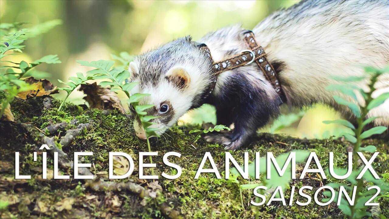 Sur Animaux dès 16h30 : L'île des animaux