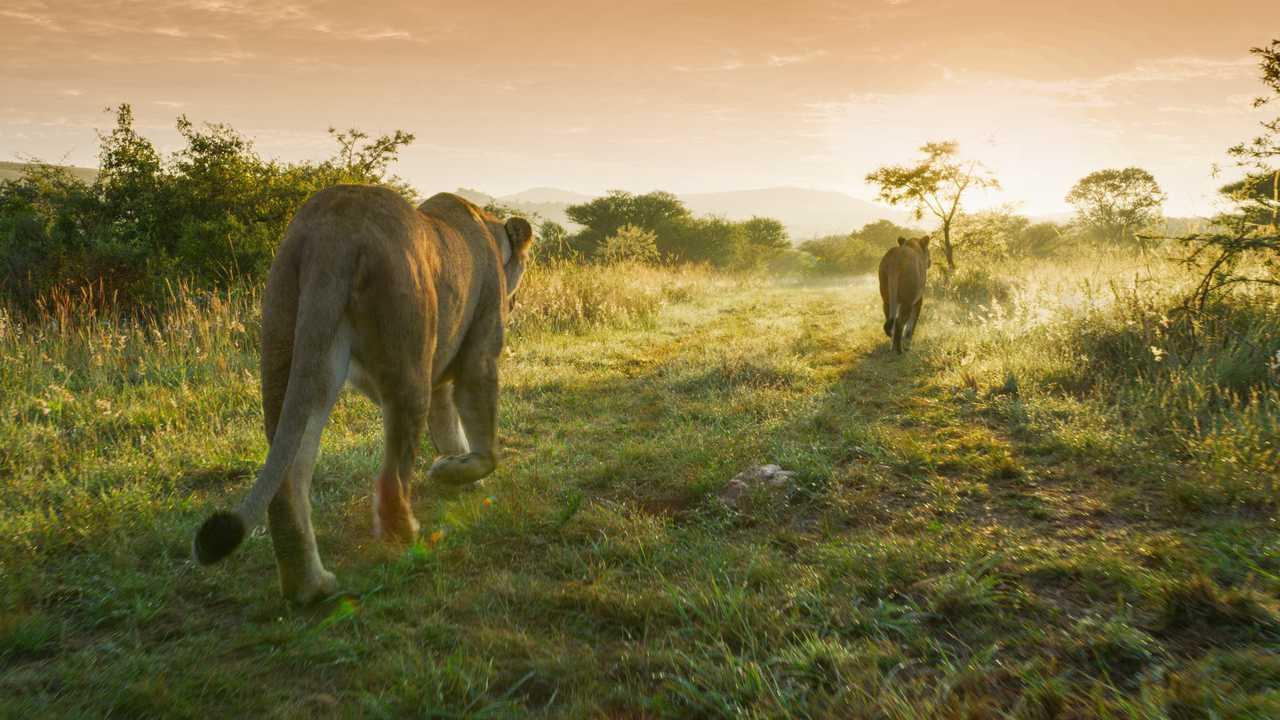 Sur National Geographic Wild dès 22h25 : Prédateurs du crépuscule