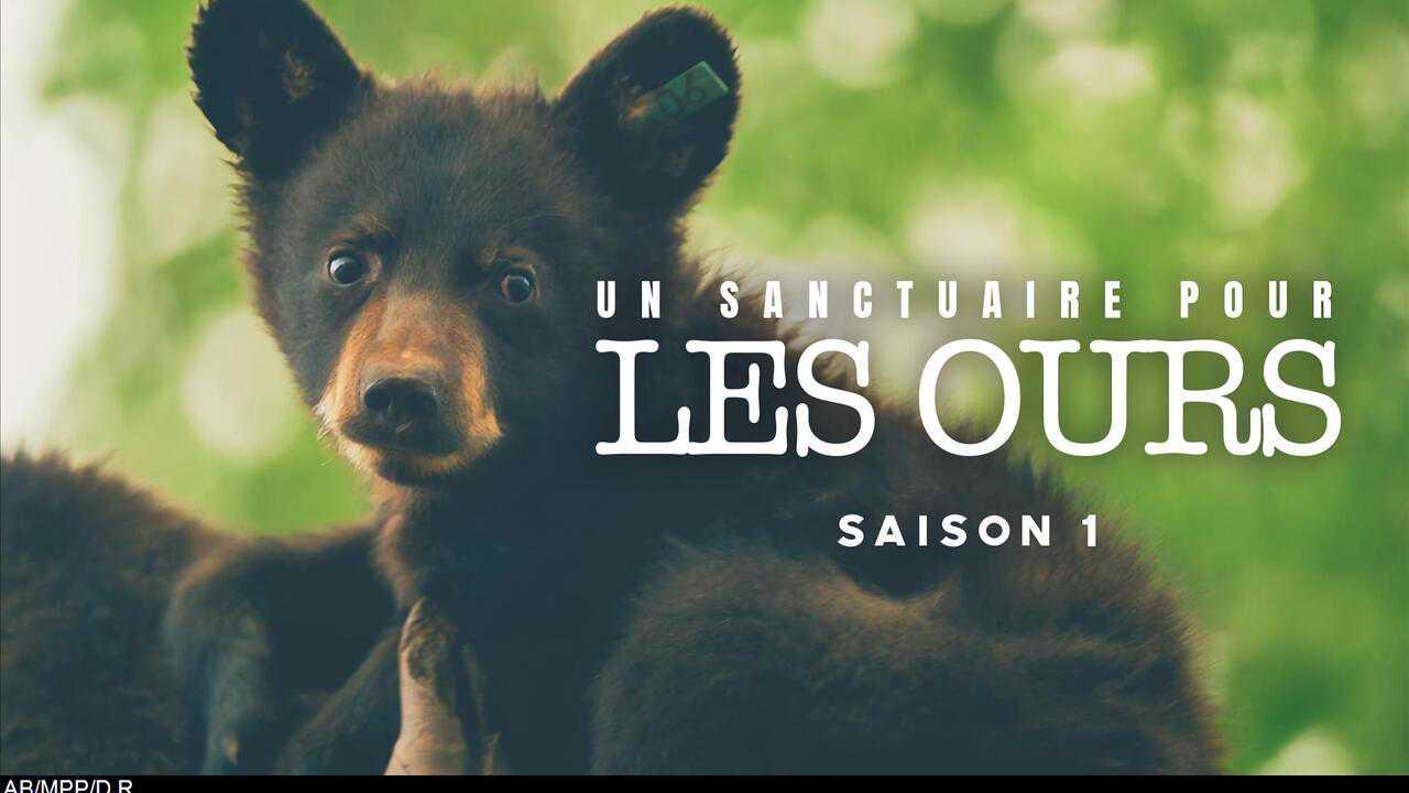 Un sanctuaire pour les ours
