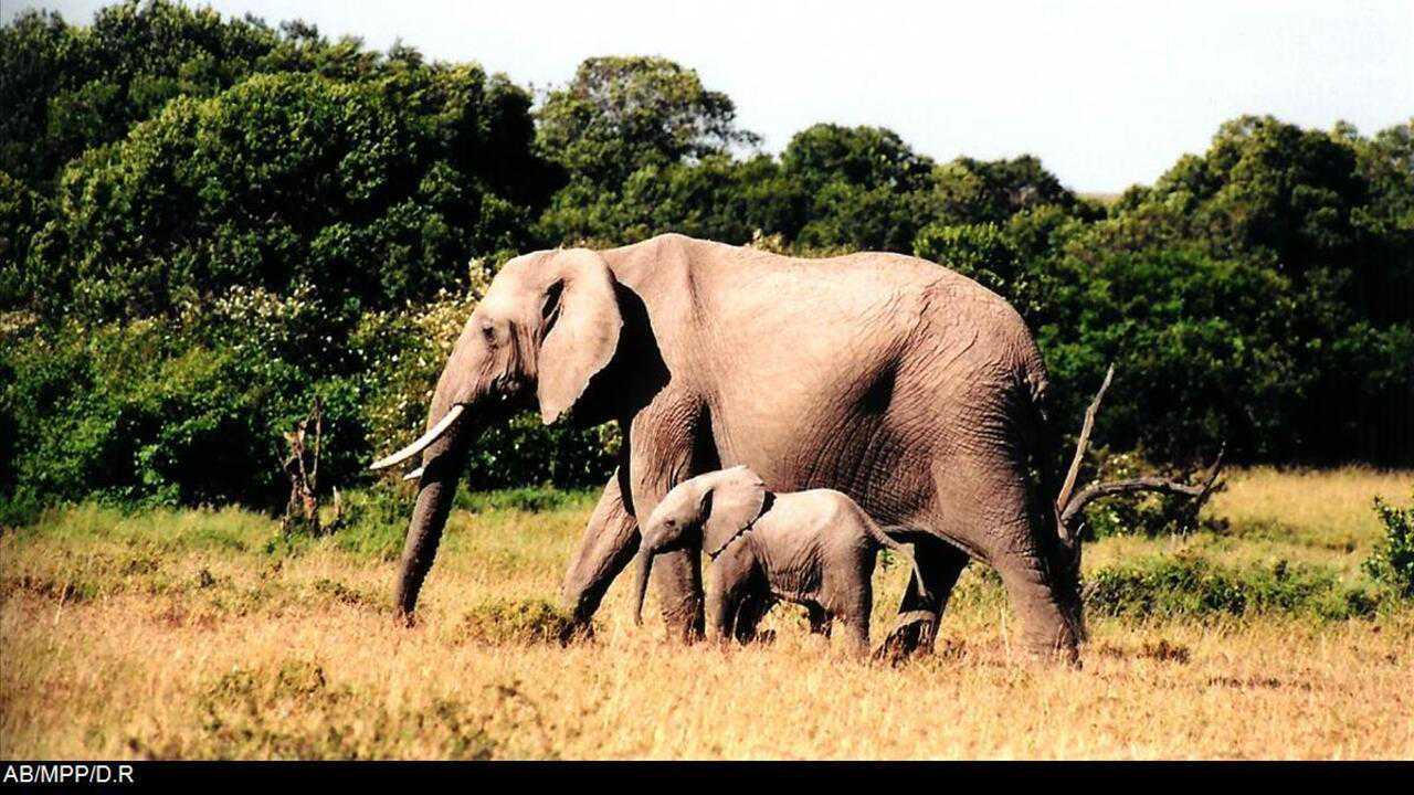 Sur Animaux dès 22h10 : Sur la piste des éléphants sauvages du Sri Lanka