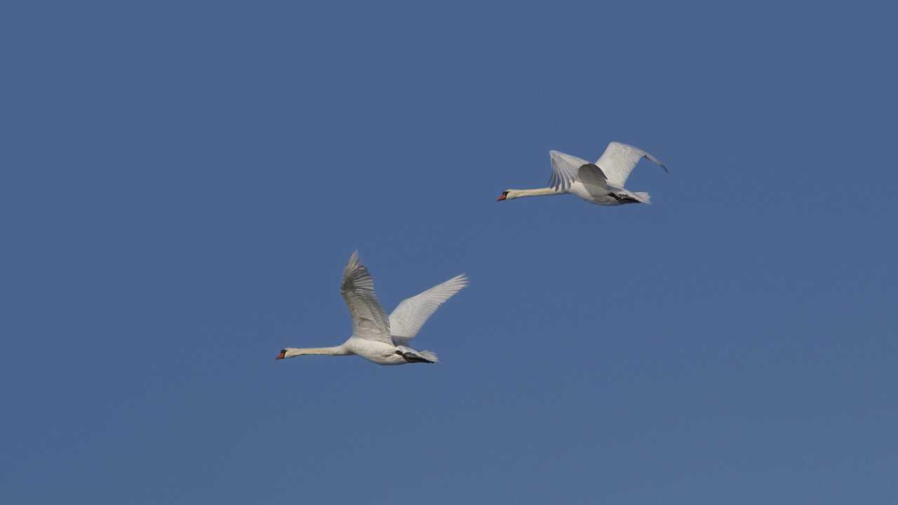 Sur Chasse et Peche dès 12h34 : Québec à vol d'oiseau
