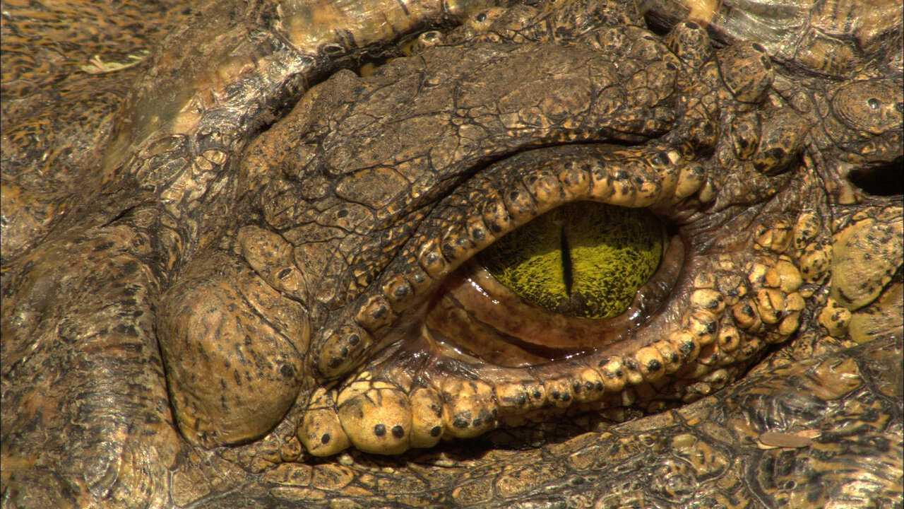 Sur National Geographic Wild dès 21h35 : Hippo vs croco
