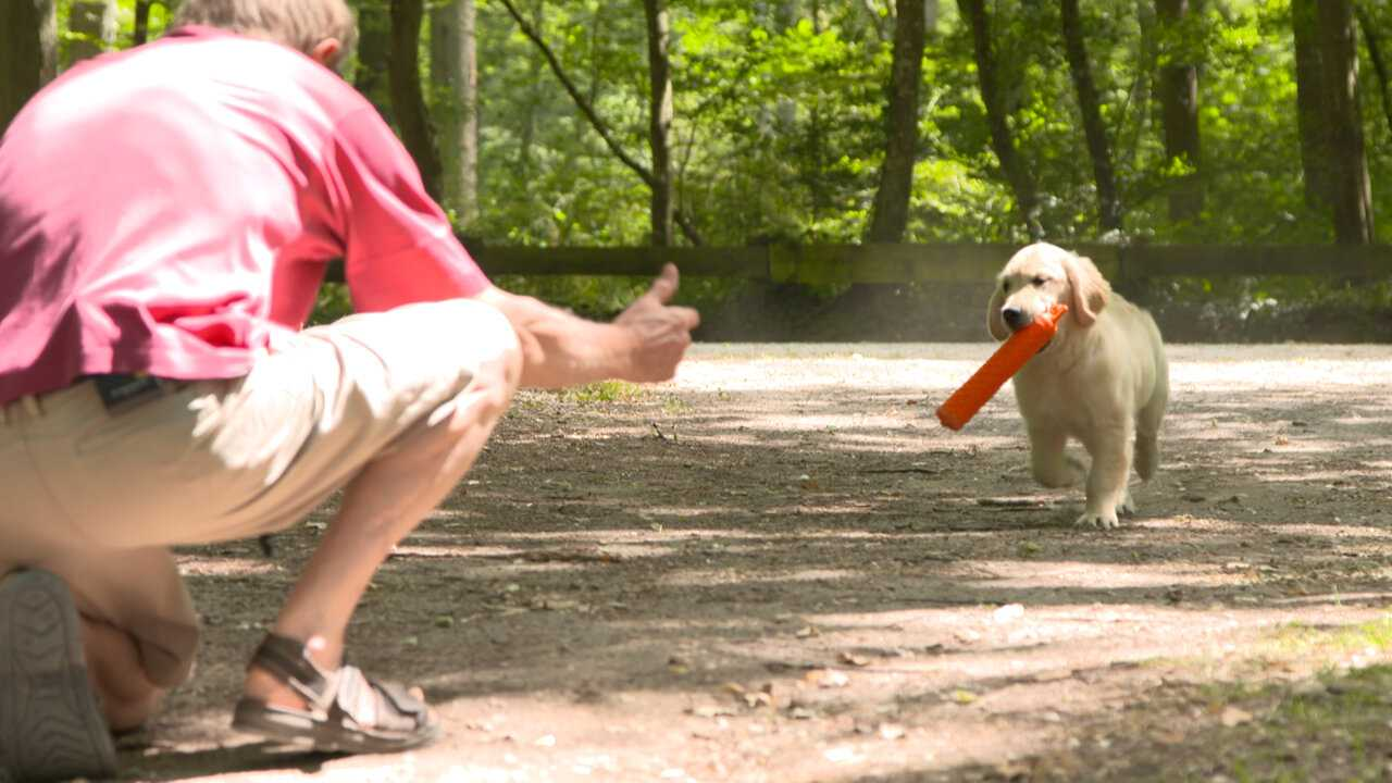 Sur Chasse et Peche dès 16h49 : Les chiens de chasse