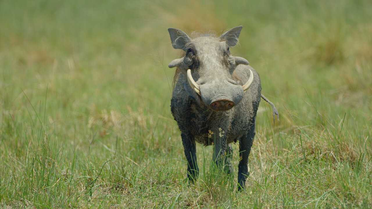 Sur National Geographic Wild dès 23h20 : Le royaume sauvage