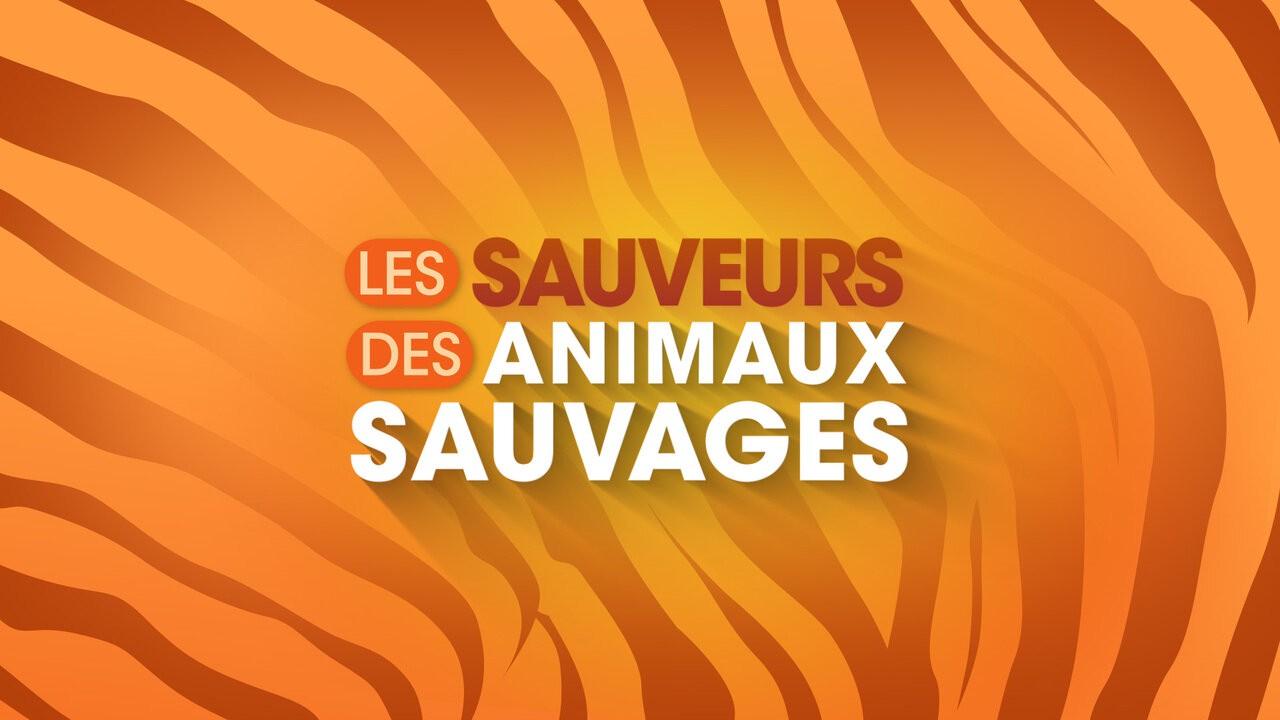 Les sauveurs des animaux sauvages (Documentaire)